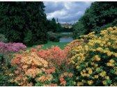 Blütenpark Pruhonice