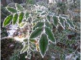 Pflanzen in Pruhonice Park