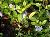 Blumen aus Garten des Parkhotels Pruhonice