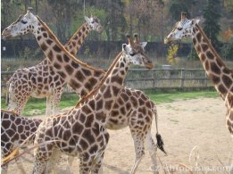 Prager Zoo